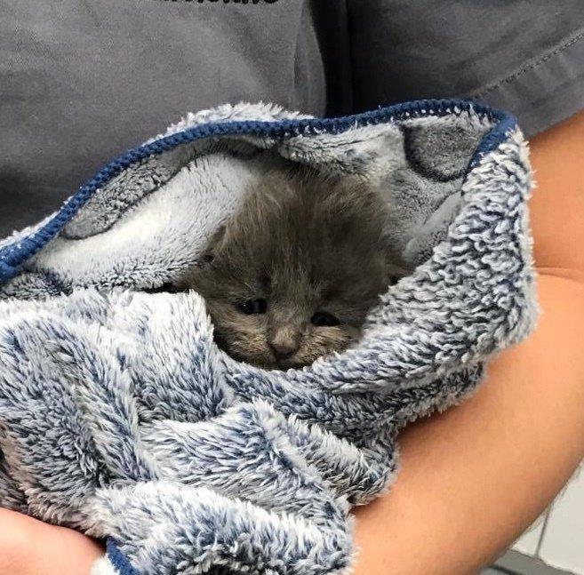 包まれた子猫
