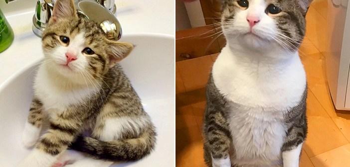 悲しそうな目の猫