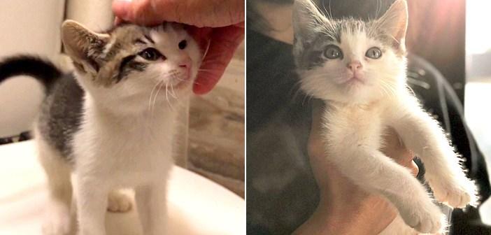 郵便局員と子猫