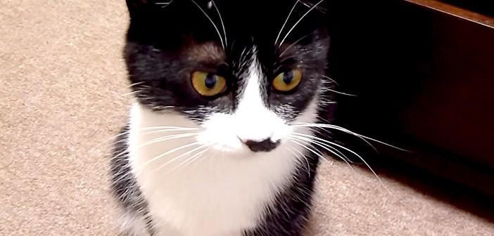 とぼける猫さん