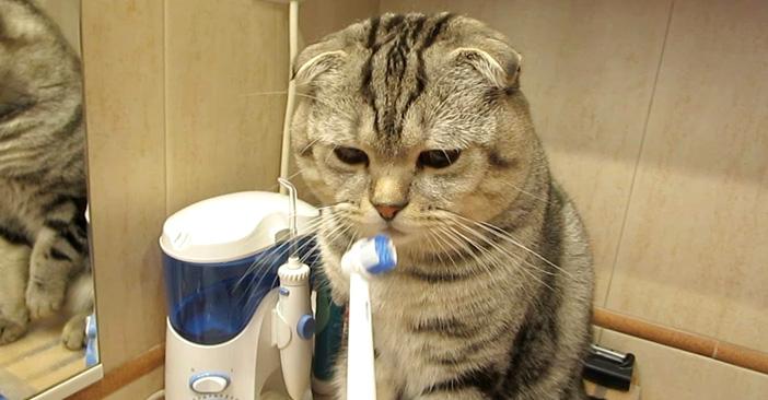 歯磨き好きの猫