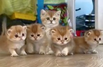 向かって来る子猫達