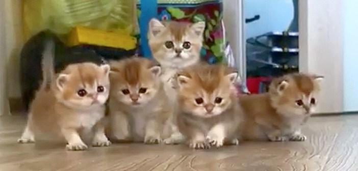何にでも興味津々の子猫達♪ 愛らしい足取りで一斉に駆け寄ってくる姿が可愛すぎる ( *´艸`)♡