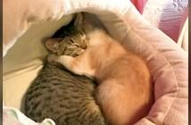 抱きしめ合う子猫