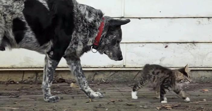 子猫についていく犬