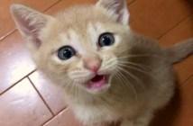 ご飯を催促する子猫