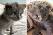フワフワの子猫