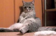 お腹をポンポンする猫