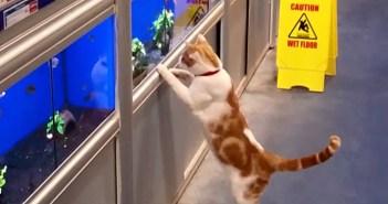 お店に通う猫