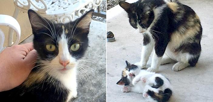 サプライズを届ける猫