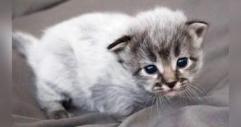 フィーバーコートで生まれた子猫