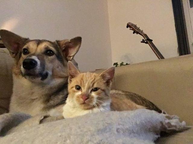 先住犬と子猫