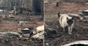 猛烈な山火事の中を生き残った猫。自宅跡に戻った家族の姿を見つけた途端、勢いよく駆け寄ってくる姿に胸が熱くなる