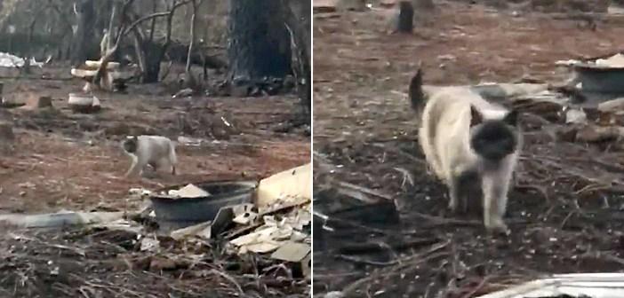 山火事を生き延びた猫
