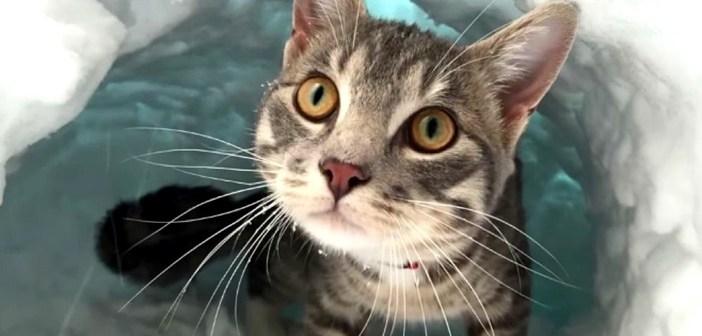 """窓を開けると雪の壁が! 物凄い勢いで雪を掘って、""""かまくら作り"""" をする猫さんにビックリ (*゚0゚)!"""