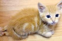 後ろ足が動かない子猫