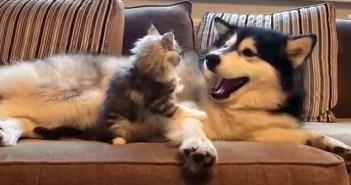 仲良しな子猫と大型犬