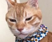 寝込んだ飼い主さんを心配する猫さん。枕元で見せた優しい行動が、飼い主さんの沈んだ心を温める (*´ェ`*)