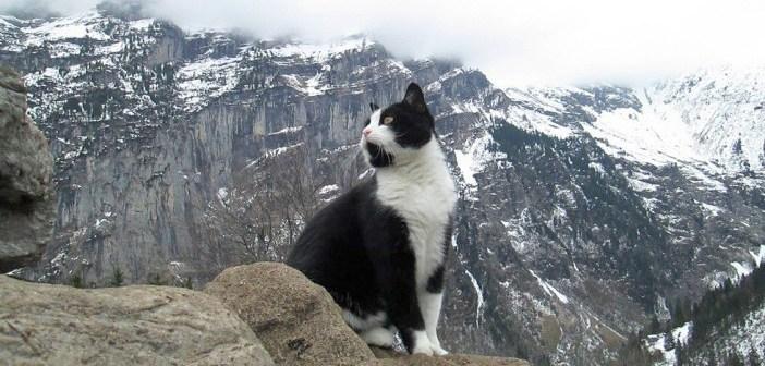 道案内する猫