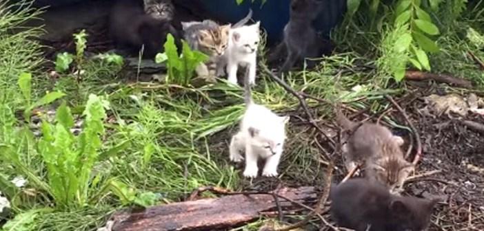 続々と現れる子猫達