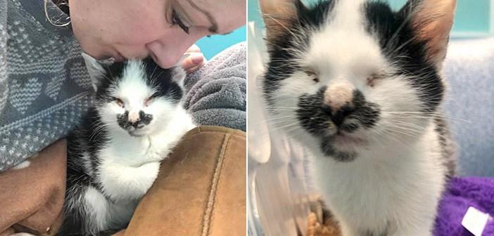 保護施設で盲目の子猫の声に気づいた女性。どうしても子猫を置いていけず、子猫の幸せを見つけるために自宅へと連れ帰る