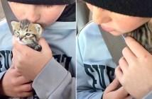 子猫達を助ける男の子