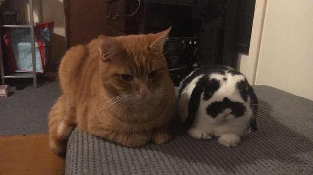並ぶ猫とウサギ