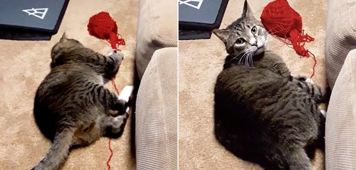 コッソリと毛糸玉で遊んでいた猫さん。飼い主さんの視線にハッと気づいた瞬間、可愛すぎるリアクションが返ってきた♡