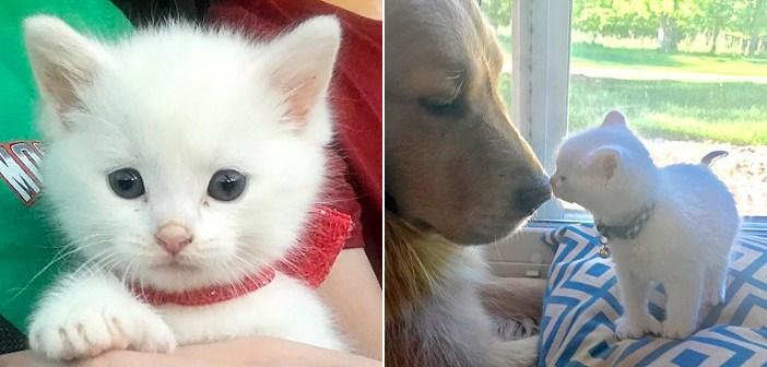 新しい家に迎えられた親指のある保護子猫。そこで出会った優しい犬が、幼い子猫を素敵な猫へと成長させる (*´ェ`*)