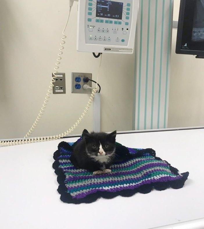 動物病院の子猫