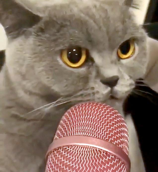 マイクで喋る猫