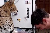 大きな猫さんの猫パンチ