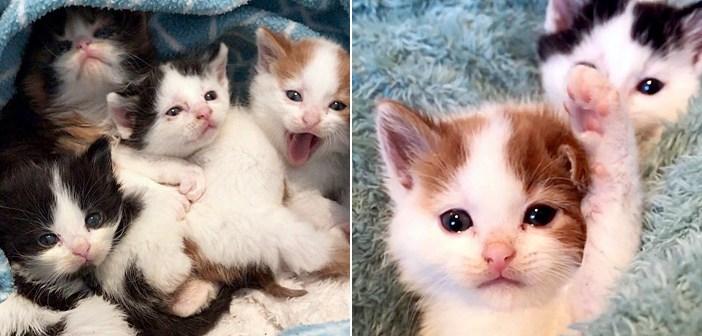 可愛い子猫達