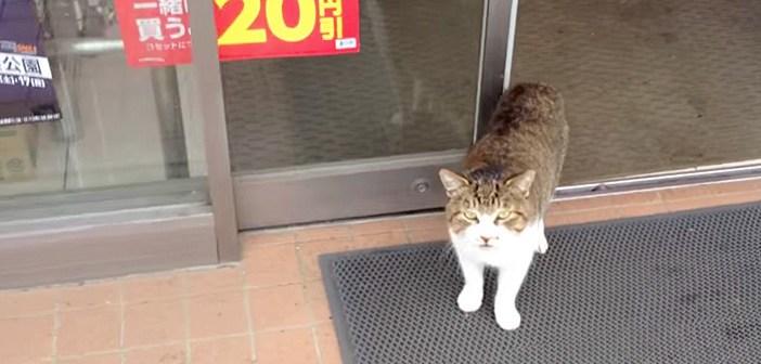 コンビニから出てきた猫