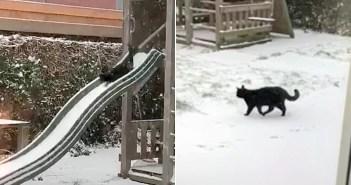 雪を楽しむ猫