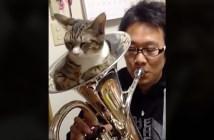 音を消す猫
