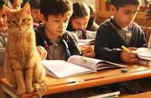 小学生と猫