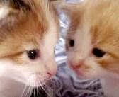 顔を近づけながら会話を続ける2匹の子猫。その声がとっても可愛くて、思わず心が幸せに (*´ω`*)♡