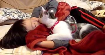 大好きな男の子が寝ていると、いつも寄り添ってくる猫さん。幸せいっぱいに男の子を毛づくろいする姿に心が温まる (*´ェ`*)