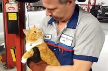 車の中から助け出された猫