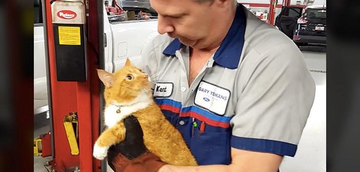 整備待ちの車の中から猫の声が! 整備士さんが車を壊して救出すると、キョロキョロしながら愛らしい姿を見せてくれた♪