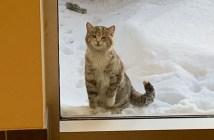 寒さの中現れた猫