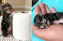 冷たい身体で保護された子猫
