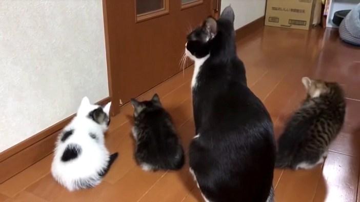 ドアを開けて欲しい猫の親子