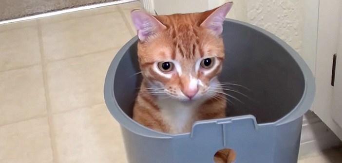 やっぱり猫さんは狭いところが大好き♪ 色々な場所に次々とフィットしていく猫さんが可愛い ( *´艸`)♡