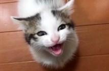 ご飯をおねだりする子猫