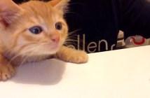 ご飯を狙う子猫