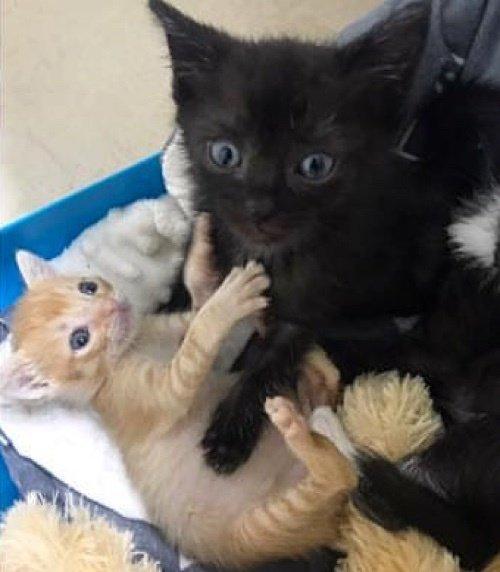 仲良し子猫達