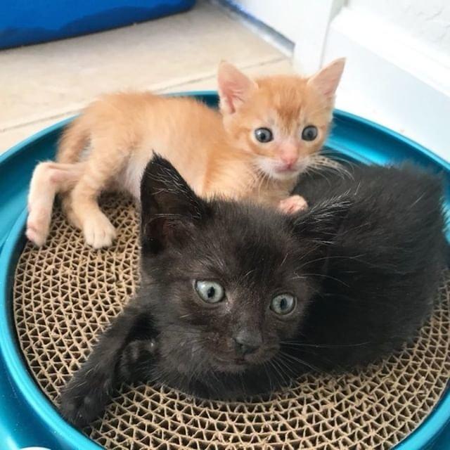 一緒の子猫達