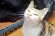 アイスホッケーと猫